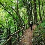 Nel bosco del Castello della Pietra