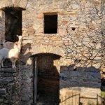 Esterno di cascina con caprette sulla via per San Pietrino
