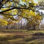 Il sole invernale filtra tra gli alberi a Prato della Casa