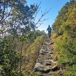 Sulla mulattiera selciata verso la vetta della Rocca Liverna