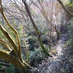 Sentiero nel bosco lungo l'antico acquedotto