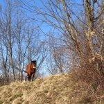 Cavallo a zonzo