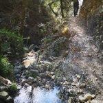 Nel bosco in Valgrande