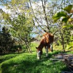 Cavallo a casa Betania, a Crevari