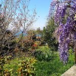 Scorcio tra i fiori a Borgonuovo, Crevari