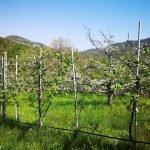 Frutteto lungo il sentiero per Ciaè