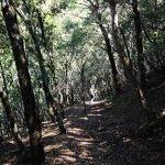 Addentrandoci nel bosco